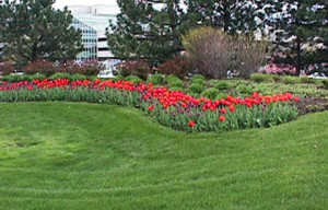 commercial landscaping services NH